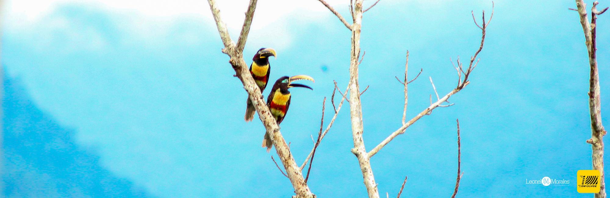 Cientos de Aves para Observar