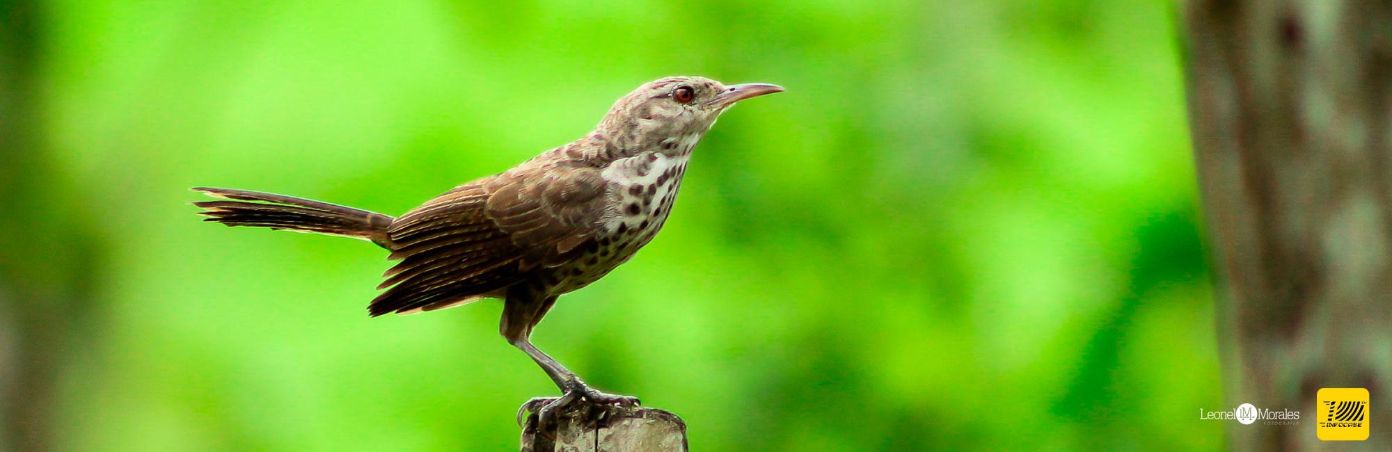 Birdwatching for You to Enjoy