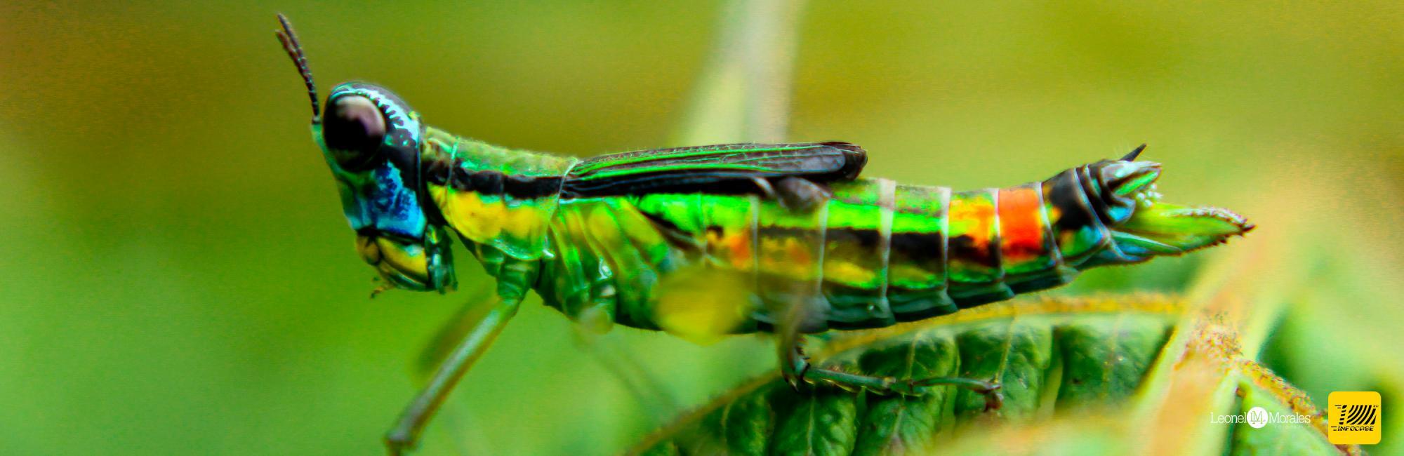Entretiénete con Insectos del Área