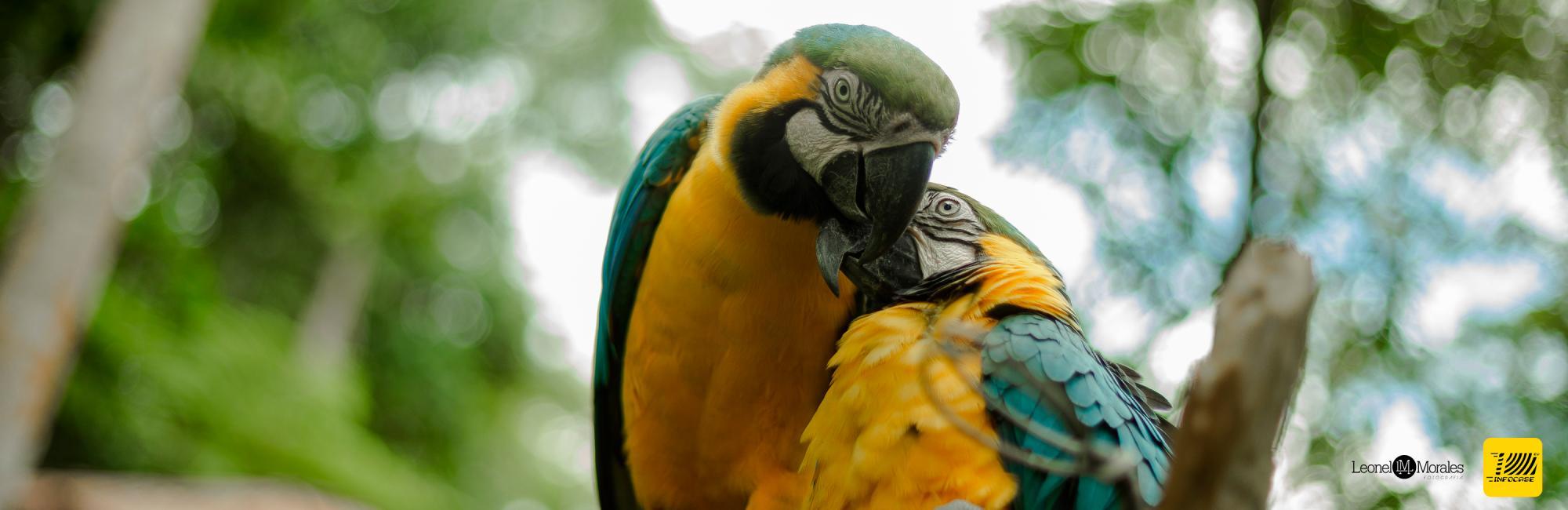 Be enchanted by Putumayo Biodiversity