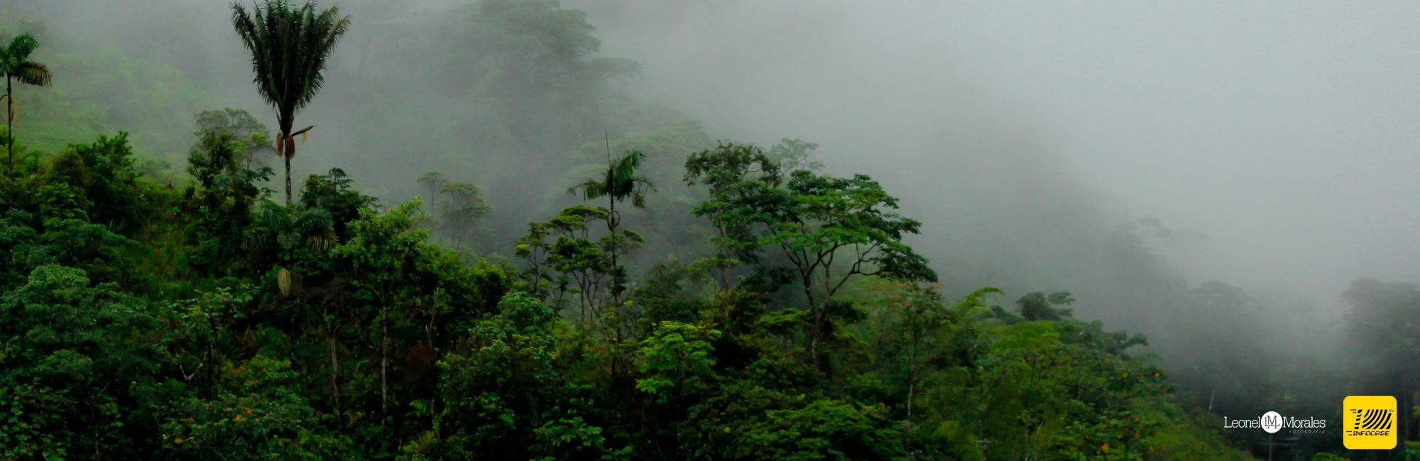 Be Amazed by the Flora Putumayo